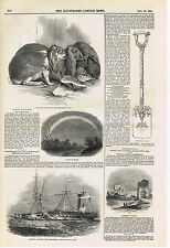 Rabbits-Lunar Rainbow-Egremont Castle-Collision of Greenhithe -1845 Wood Print