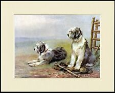 OLD ENGLISH SHEEPDOG TWO DOGS ON WATCH LOVELY DOG PRINT MOUNTED READY TO FRAME