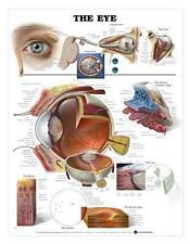 The Human Eye Anatomical Chart/Charts/Models