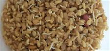 Bockshornklee  Keimsaat  Samen für Keimsprossen 500 Gramm