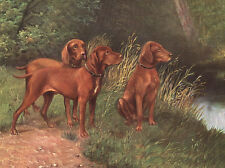 HUNGARIAN VIZSLA CHARMING DOG GREETINGS NOTE CARD BEAUTIFUL GROUP OF THREE DOGS