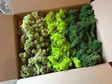 trainmad BULK MOSS 200g box Model Scenery Tree Hedge Shrub Train War Slot Farm