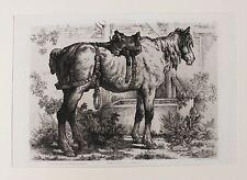 1873 le curieux kutschpferd potions Cheval Horse CHAVAL paard Original Gravure