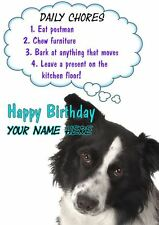 Border Collie Rules Birthday PIDS33  A5 Personalised Card Dad mum son Any name