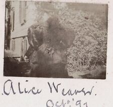 VINTAGE 1897 STRATFORD CONNECTICUT VICTORIAN LADY ALICE WEAVER FASHION OLD PHOTO