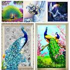 Multi-style 5D Diamond Painting Peacock Rose Embroidery Rhinestone Cross Stitch