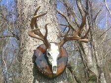 DEER ANTLER MAGIC antler coloring system- small size use on sheds, moose, elk