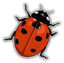 """Ladybug Cartoon Car Bumper Sticker Decal 5"""" x 5"""""""