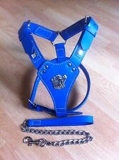 STAFFORDSHIRE BULL TERRIER ENGLISH BULL LEATHER HARNESS+CHAIN LEAD
