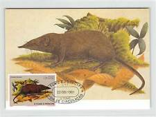 S. TOME MK 1981 FAUNA MAUS SPITZMAUS MAXIMUMKARTE CARTE MAXIMUM CARD MC CM m215