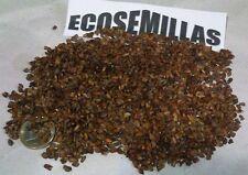 Cipres cementerio, ITALIANO Cupressus sempervirens 130 semillas COMPRA 2 ENVÍO 3