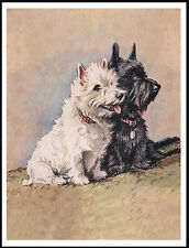 WEST HIGHLAND AND SCOTTISH TERRIER DOGS LOVELY DOG PRINT POSTER