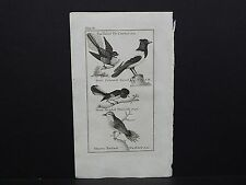 Buffons Natural History 1792 Birds S1#23 Fan-Tailed Fly Catcher, Warbler