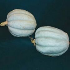 Pumpkin, Zapalo Plomo, 4 Seeds, Very Rare Vegetable