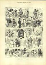 1882 Birmingham Fact Cattle Show First Prize Judging Pigs And Swedes