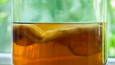 1st class post! ORGANIC Kombucha Starter Pack SCOBY + LIQUID printed instruction