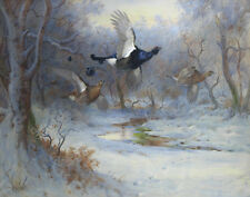 Thorburn Archibald Blackcock And Grouse In Flight Winter Print 11 x 14    #3805