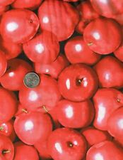 Shiny RED APPLES Apple Fruit Food Jar Novelty Quilt Fabric Fat Quarter FQ FQs