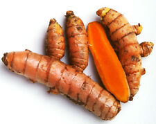 Turmeric Roots Yellow Fresh Whole Raw Organic Non GMO - Fresh Harvest: 4Lbs.