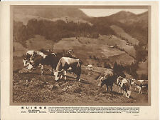 GRAVURE ANNEE 30 SUISSE PATURAGE L OBERLAND BERNOIS BURONS VACHES CLARINE