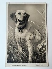 Vintage Postcard - Animals - Yellow Labrador Retriever - Masons