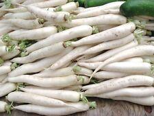 20 Ravanello candela di GHIACCIO seeds semi ortaggio vegetables orto korn
