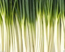 1000 TOKYO LONG,White BUNCHING,GREEN ONION SEEDS,Plant  Spring/Summer Or Fall.