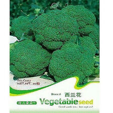 FD1880 Broccoli Seed Cauliflower Seed Green Vegetable Seeds ~1 Pack 50 Seeds~