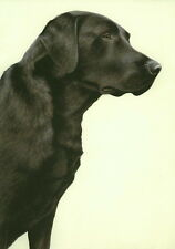 Nigel Hemming JUST DOGS - BLACK LABRADOR Labs Retrievers Gun Dog Limited Edition