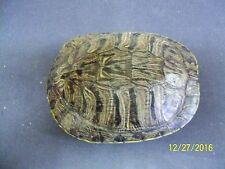 Turtle Shell 6 - 7 in., Crafts,Jewlery,Educational,Taxidermy,Oddity,Educational