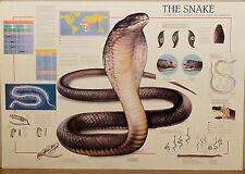 (PRL) 1994 THE SNAKE IL SERPENTE DIE SCHLANGE VINTAGE AFFICHE ART PRINT POSTER