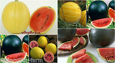 20 Seeds Sweet Giant watermelon Fruit seeds Combo Pack: Black, Yellow watermelon