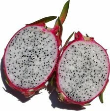 Dragon Fruit Seeds - MEDICINAL BENEFITS - Unique Cactus Bearing Fruit - 50 Seeds