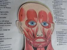 Anatomische Wandtafel Klappbar Muskulatur Eingeweide Nervensystem Knochengerüst