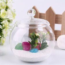 Transparent Micro Meaty Bryophytes Landscape Glass Vase Bottle With Cover E0