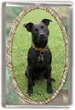 Patterdale Terrier  Fridge Magnet No 1 by Starprint