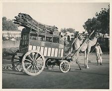 INDE c.1950 - Chameau tractant une Charette à Delhi  - GF 182