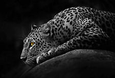 Framed Print - Wild Jaguar on the Rock in Stealth Mode (Panther Picture Poster)