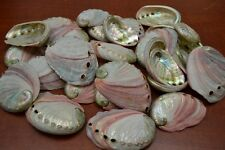 """25 PCS NATURAL RED ABALONE SEA SHELL (ONE SIDE POLISHED) 2 1/2"""" - 3"""" #7116"""