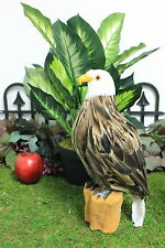 Feather Brown Eagle Taxidermy Medium Stuffed Furry Animal Bald Perched Log L