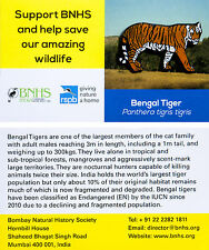 RSPB Pin Badge | Bengal Tiger | International India BL Partner [00868]