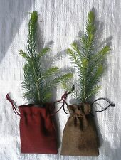 2 x Real Christmas Tree  Plants 25 - 30 cm  in Jute Hessian Drawstring Bags