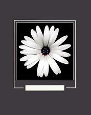 Harold Feinstein sunscape Daisy poster stampa d'arte immagine 50x40cm-porto franco