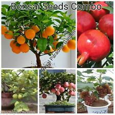 Bonsai Fruit Seeds Combo - Pomegranate Grapes Guava Apple Orange 5 Seeds Each