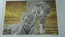 Stephen Gayford The Suitor ( tiger ) Limited Edition( proof Print) Framed