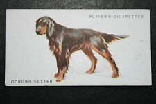 Gordon Setter    Early 1930's Original Vintage Illustrated Card