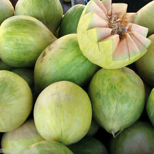 Crenshaw Melon Heirloom Seeds - Non-GMO - Untreated - Open Pollinated!