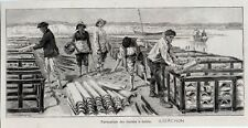 1892  --  ARCACHON  FORMATION DES RUCHES A TUILES C283
