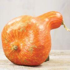 Pumpkin, Boston Marrow, Rare Heirloom Vegetable, 4 seeds.