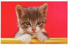 TINY KITTEN FACE Gray Tiger Stripe Tabby Red Background  Vintage Postcard